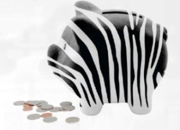 Piggy Zebra